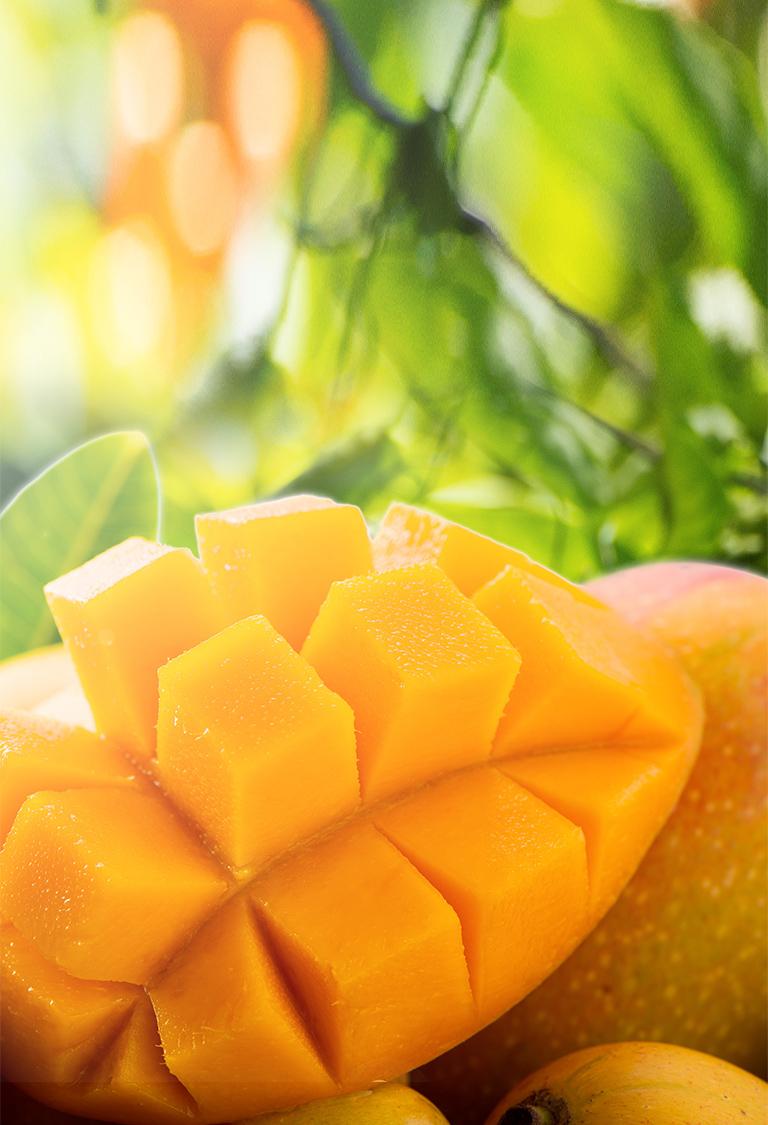 沖縄完熟マンゴー写真